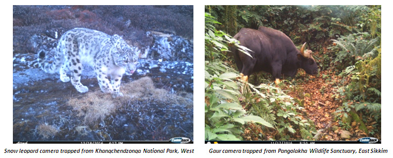 Wildlife Estimation Study Sikkim
