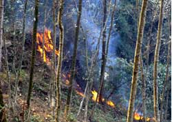 Sikkim Forest Fire